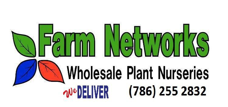 7 Gallon Clusia-Wholesale Hedge Plants Nursery