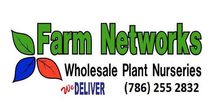7 Gallon Clusia-Wholesale Hedge Plants Nursery
