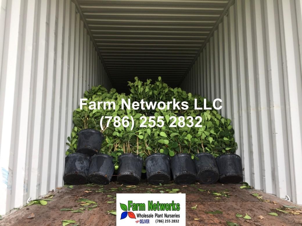 Farm-Networks-Miami