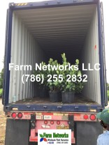 Farm-Networks-Tropical Foliage Plant Exporters