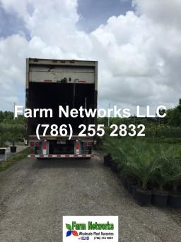 Florida foliage growers exporters