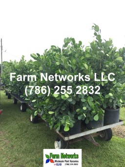Florida foliage Nursery