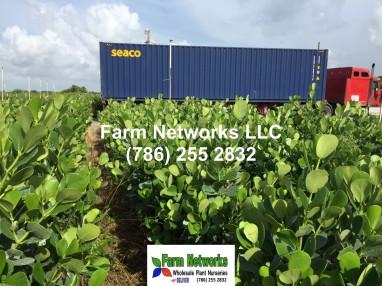 Florida foliage plant-exporter