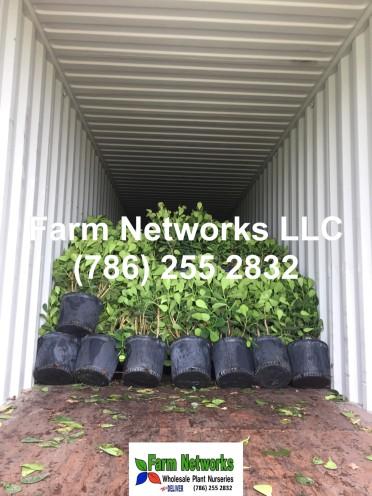 Florida plant-exporter