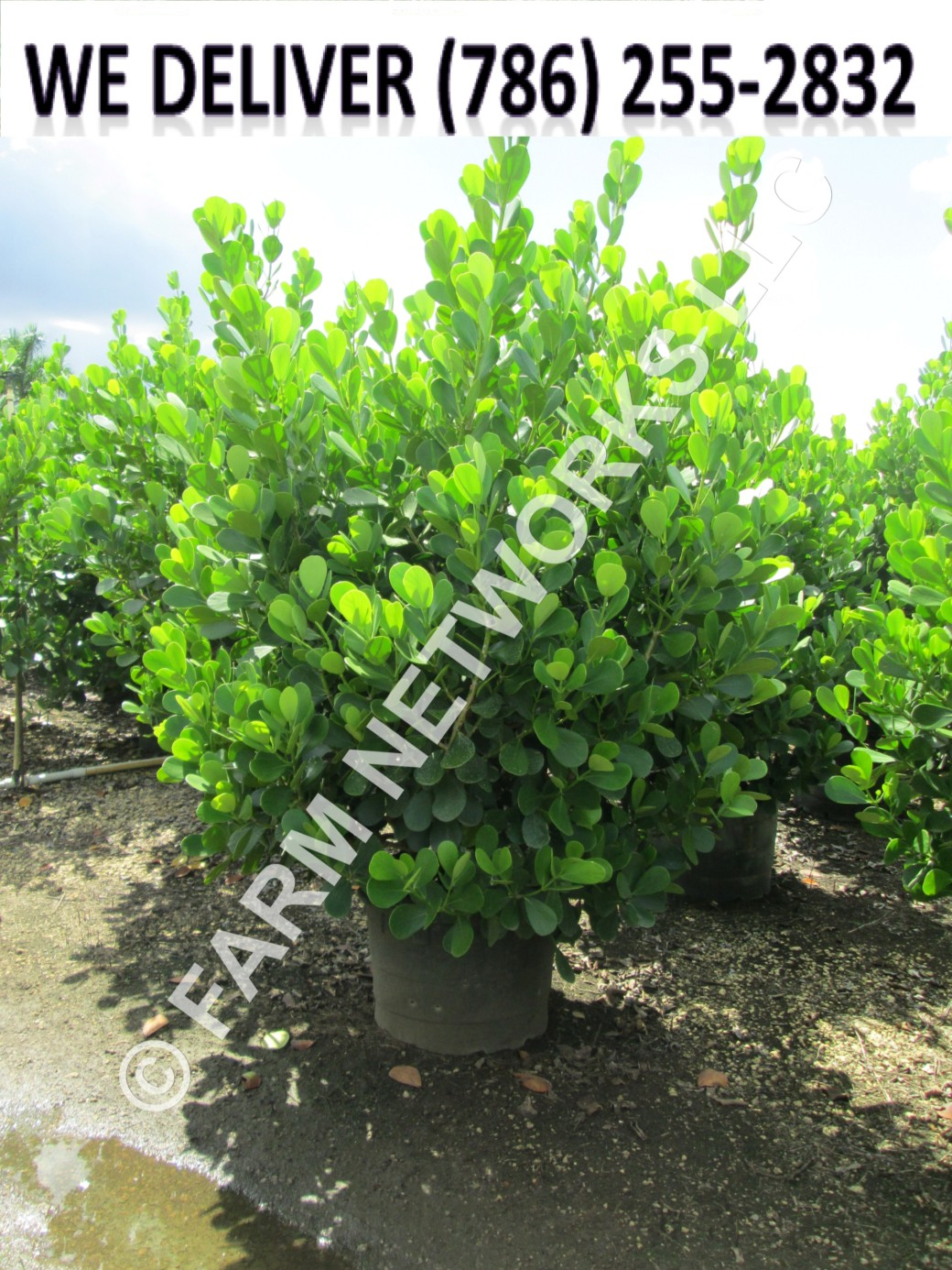 Florida Tropical Foliage Plants
